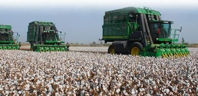 新疆棉企业正面临较大收购压力